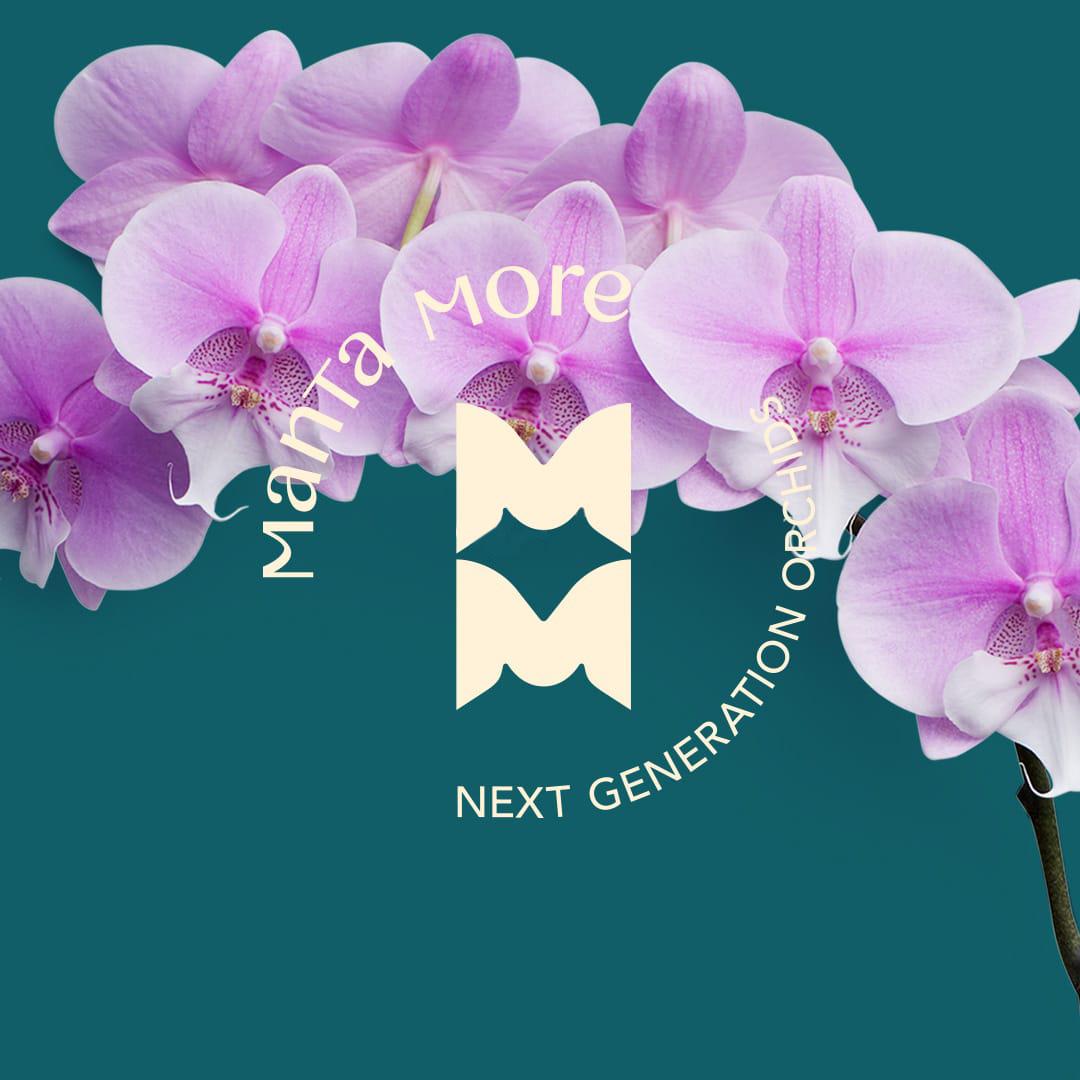 MANTA MORE brand identity